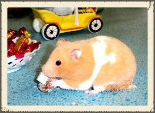 rabbitsguinea pigsferretschinchillashamstersmice
